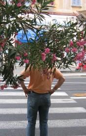 Via Principe Amedeo - alberi
