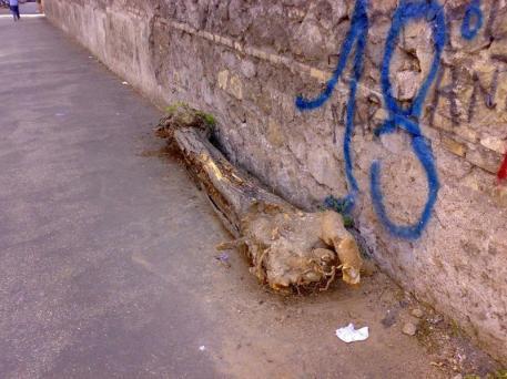 Alberi il degrado di roma pagina 2 for Ufficio decoro urbano roma